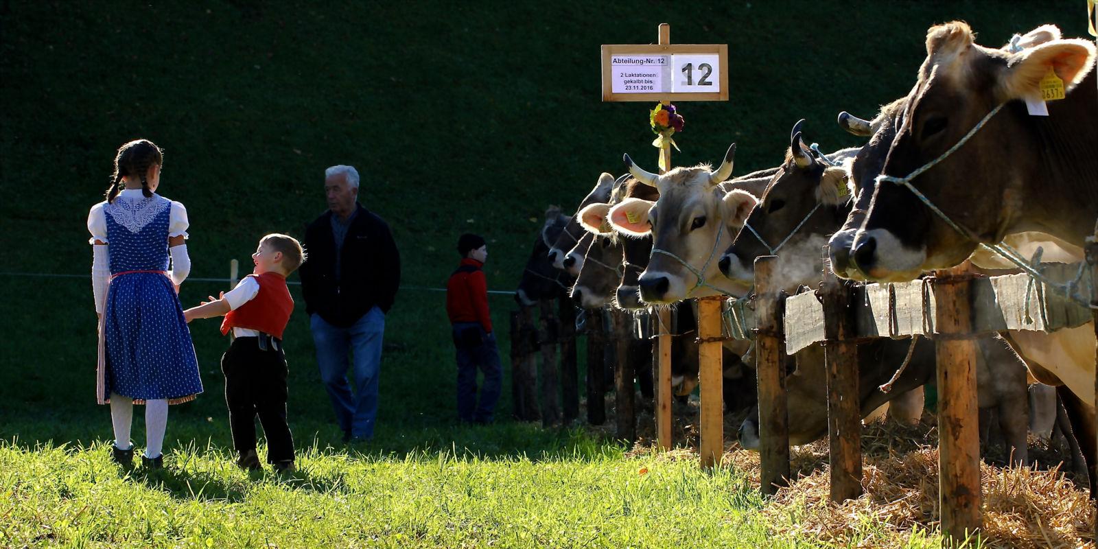 Szene an der traditionellen Viehschau von Ebnat-Kappel