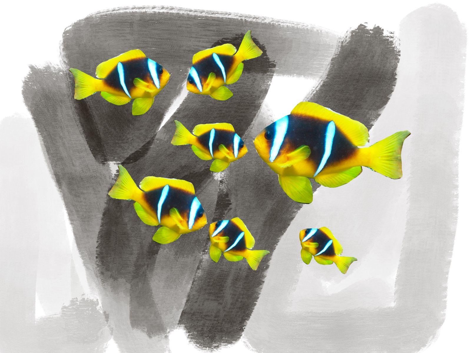 Clownfish multipliziert